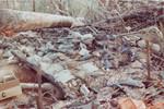 Hill 724 bunker