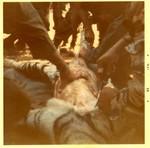 Company A Killed a Tiger